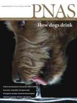 Cover Pnas Human Behavior Under Inequality Shapes Inequality